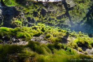 green algae at blue spring