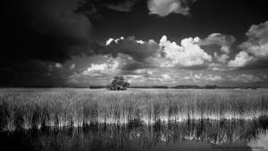 Clyde Butcher Everglades